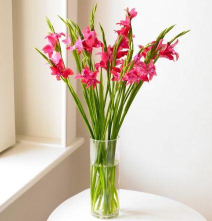 Gladiolus Flower Arrangements
